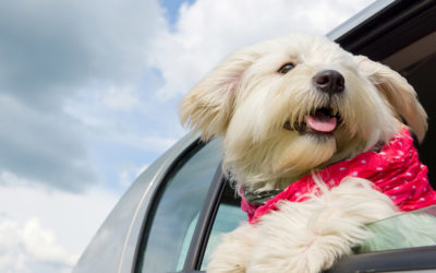 The Best Cars for Dogs and Dog Owners